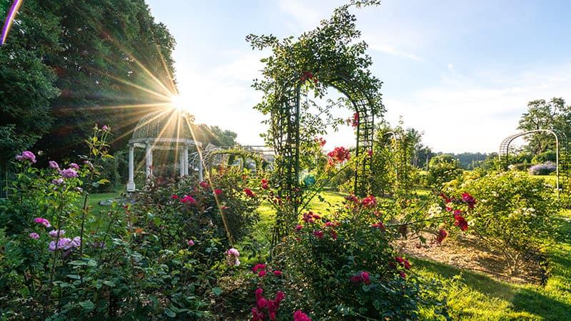 Lyndhurst Rose Garden
